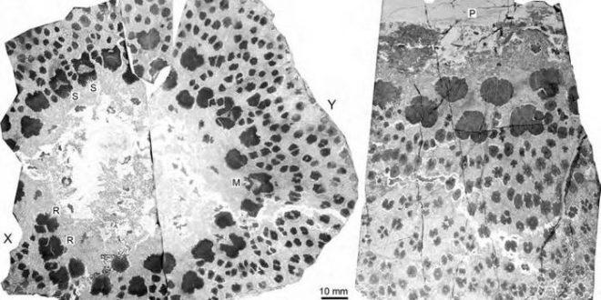 Les arbres les plus anciens sur Terre étaient également les plus complexes