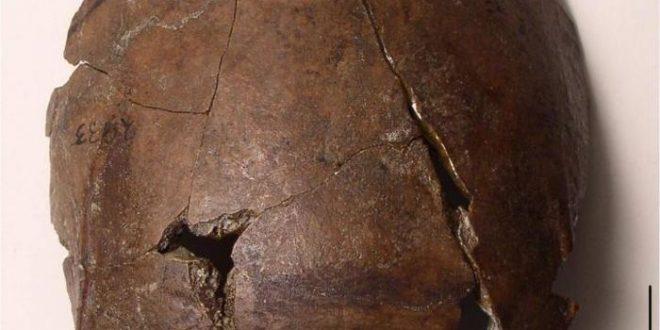 Un crâne de 6 000 ans pourrait être la plus ancienne victime d'un tsunami