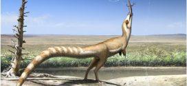 """Le """"masque de bandit"""" du Sinosauropteryx"""