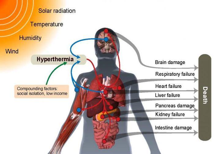 Les différents impacts de la vague de chaleur sur le corps - Crédit : C. Mora