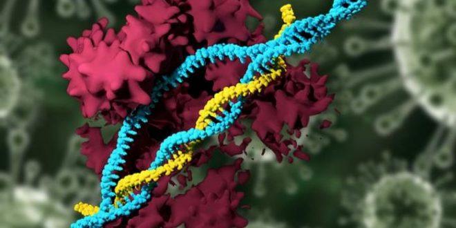Des nanoparticules pour transporter CRISPR-Cas9