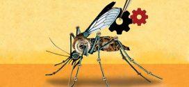 Prudence sur le Gene Drive pour la protection des écosystèmes