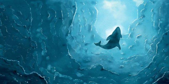 Les baleines bleues sont parfois gauchères