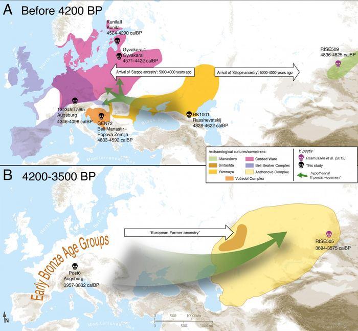 Une carte de la circulation possible du bacille de la Peste à travers l'Eurasie.  A) Entrée de Yersinia pestis en Europe à partir de l'Eurasie central avec l'expansion des éleveurs Yamnaya il y a 4 800 ans.  B) Circulation de Yersinia pestis au sud de la Sibérie à partir de l'Europe. Seules les génomes entiers sont affichés Crédit : Aida Andrades Valtueña. Andrades Valtueña et al. (2017). The Stone Age Plague and its Persistence in Eurasia. Current Biology.