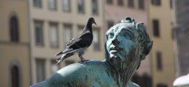 Les pigeons peuvent différencier l'espace et le temps