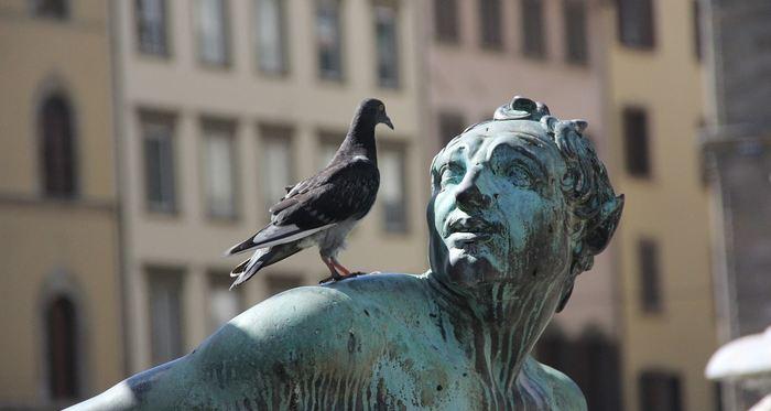 Dans des expériences, les pigeons ont montré qu'ils pouvaient différencier l'espace et le temps. Cela montre que des animaux d'ordre inférieur sont capables d'avoir des traitements abstraits de l'information.