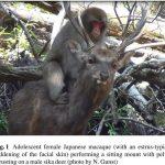 Des chercheurs rapportent l'observation de plusieurs comportements sexuels entre des macaques et des cerfs au Japon. Du côté des macaques, le comportement ressemble bien à un accouplement, mais du côté des cerfs, cela ressemble plus à une aide hygiénique et alimentaire.