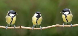 Les oiseaux apprennent le gout désagréable des insectes par mimétisme