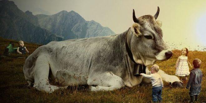 Est-ce qu'on peut éviter le diabète de type I en évitant le lait de vache ?