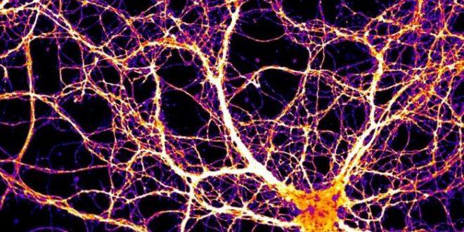 Arc, une protéine ressemblant à un virus est importante pour la mémoire et la cognition