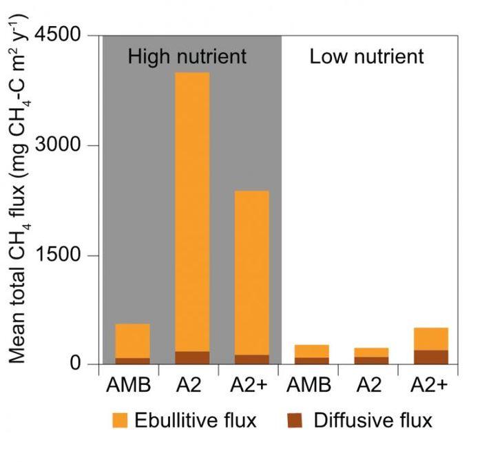 L'émission annuelle de méthane (divisé par la diffusion et l'ébullition) provenant de différents traitements dans le mésocosme. Les niveaux faibles et élevés de nutriments suivi de 3 niveaux de température. L'AMB indique la température ambiante avec A2 qui concerne 2 à 3 degrés Celsius de plus et A2+ concerne 4 à 5 degrés Celsius de plus - Thomas A. Davidson