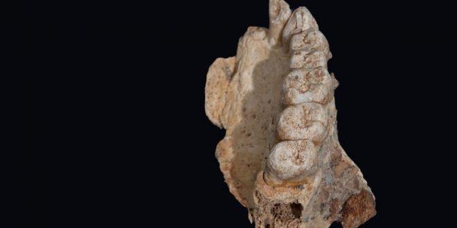 Découverte du plus vieux fossile d'Homo sapiens hors d'Afrique — Israël