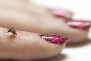 Les chercheurs rapportent que les moustiques sont dotés de facultés d'apprentissage. Ils sont capables d'associer une odeur à un choc mécanique comme lorsqu'on tente de les écraser avec nos mains. En ayant appris cette odeur, les moustiques éviteront ceux ou celles qui tentent de les ratatiner.