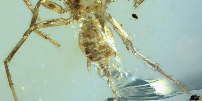 Chimerarachne, une araignée exceptionnelle préservée dans l'ambre de 100 millions d'années