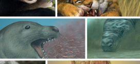 Des facteurs non alimentaires façonnent le crâne des carnivores