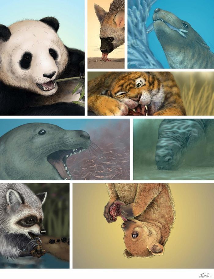 Depuis longtemps, on pensait que les crânes des carnivores se basaient sur l'adage : Vous êtes ce que vous mangez. Cependant, une étude suggère qu'il y a des facteurs non alimentaires, tout aussi importants, qui façonnent le crâne. Des facteurs aussi inattendus que la pluie dans une région.