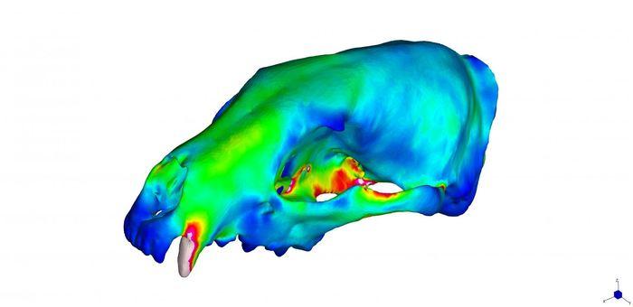 Un crâne avec une pluviométrie faible - Crédit : Z.J. Tseng et. al.