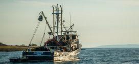 La moitié des océans touchés par la pêche industrielle