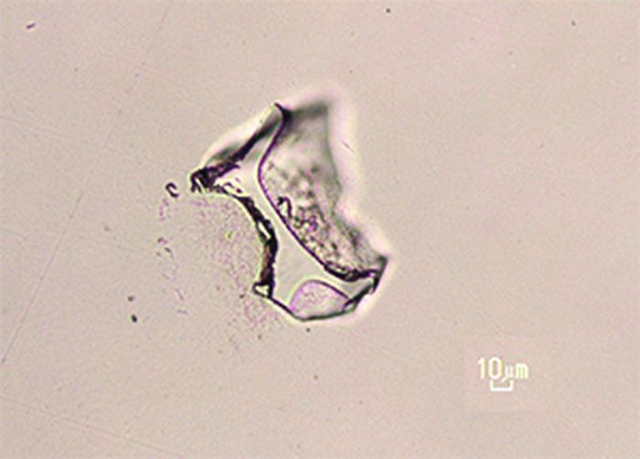 Cette image montre un morceau de verre qui a été éjecté par l'éruption du super volcan de Toba en Indonésie il y a 74 000 ans et qu'on a découvert à plus de 9 000 km sur un site archéologique de Vleesbaai en Afrique du Sud - Crédit : Racheal Johnsen