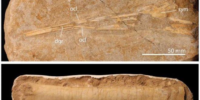 Une diversité remarquable des ptérosaures jusqu'à leur extinction