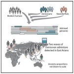 Ce graphique montre 2 vagues de généalogie Denisovienne qui sont façonné les humains modernes - Crédit : Browning et al./Cell