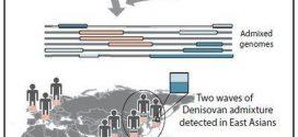 Les humains modernes se sont accouplés 2 fois avec les Denisoviens