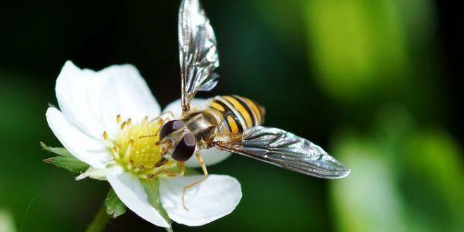 Comprendre les abeilles insensibles aux néonicotinoïdes