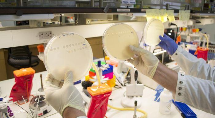 Les chercheurs de l'Université de Californie à San Diego et leurs collègues ont trouvé des preuves d'un nouveau cheminement de l'évolution et une meilleure compréhension de la rapidité avec laquelle des organismes tels que les virus peuvent s'adapter à leur environnement.