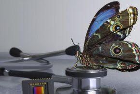 Les chercheurs rapportent la création d'une caméra, dont la vision s'inspire du papillon morpho. Cette caméra peut détecter facilement et rapidement les colorants en lumière infrarouge sur les tissus cancéreux afin que le chirurgien puisse les détecter. La caméra peut être intégrée aux lunettes du chirurgien et son cout est abordable aux alentours de 200 dollars.
