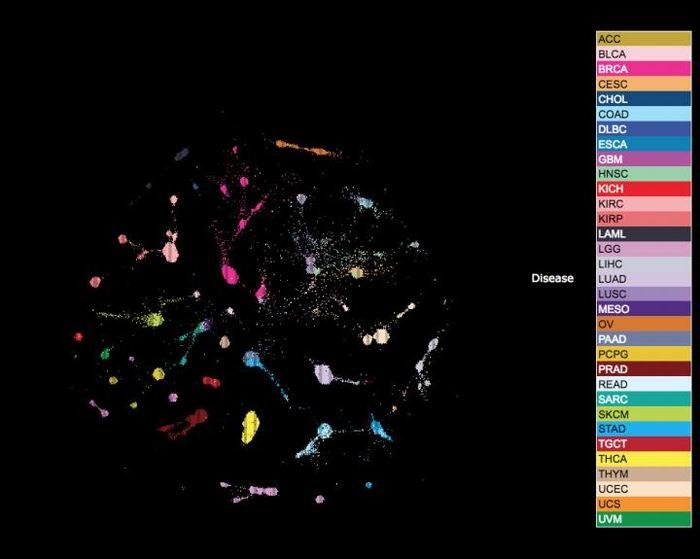 L'UCSC Tumor Map permet aux chercheurs de visualiser les patterns dominants dans les données du TCGA tels que la cellule d'origine, l'histologie moléculaire, le status de souche ou de différenciation, les voies génétiques spécifiques qui ont été altérés ainsi que le composant du système immunitaire des tumeurs - Crédit : UC Santa Cruz Genomics Institute
