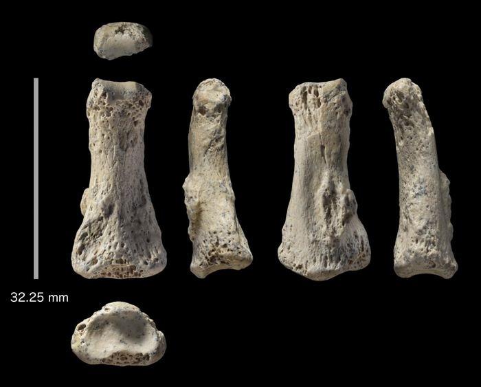 Le fossile d'un doigt au site d'Al Wuta en Arabie Saoudite - Crédit : Ian Cartwright