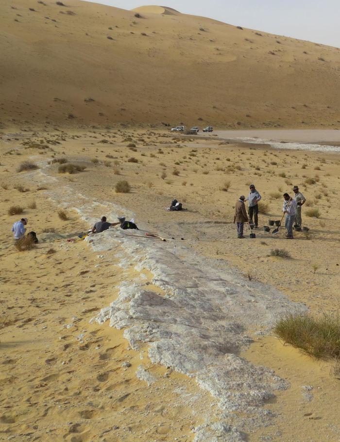 Une vue générale des excavations au site Al Wusta en Arabie Saoudite - Crédit : Michael Petraglia