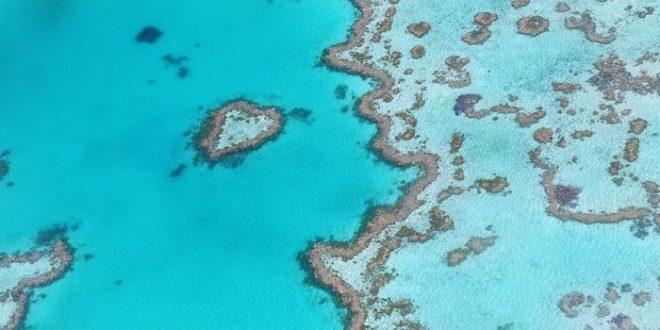 Hécatombe sur la grande barrière de Corail en Australie