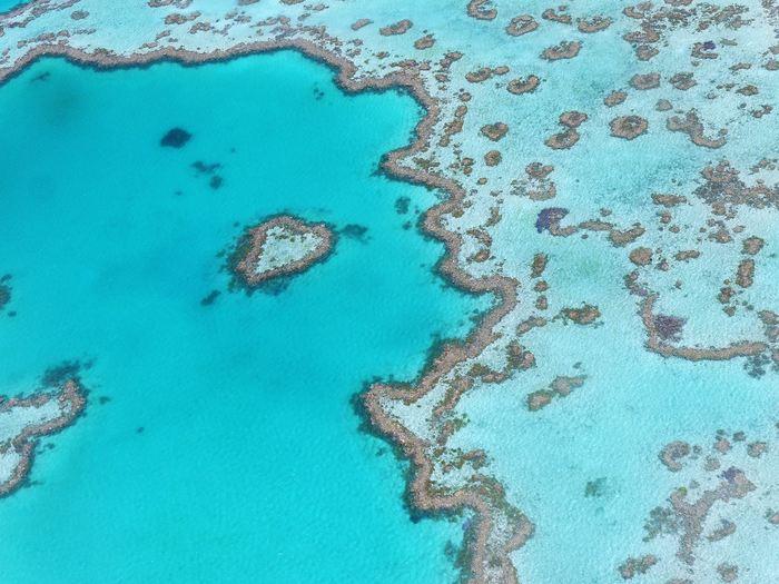 Une nouvelle étude publiée dans Nature montre que les coraux de la grande barrière de corail du nord ont connu une mortalité catastrophique suite à la vague de chaleur marine prolongée de 2016.