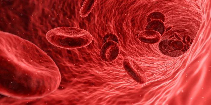 Dans un exemple sur comment les observations faites en laboratoire peuvent proposer des thérapies cliniques, une équipe internationale a annoncé que la réussite d'une thérapie génique pour les patients atteints d'une forme sévère du trouble sanguin appelé bêta-thalassémie.