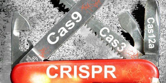 CRISPR : Modification de l'ADN en dehors d'une cellule