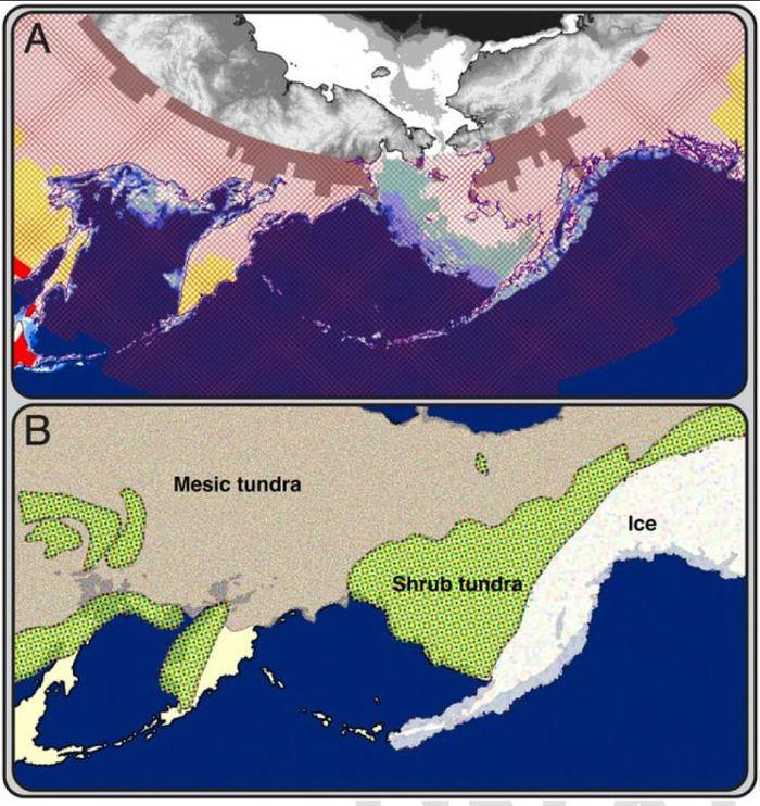 La géographie de la Béringie et les niveaux de rayons ultra-violets.  A) - La carte actuelle de la  Béringie  B) - La carte de la Béringie pendant la dernière ère glaciaire  Crédit : Leslea Hlusko, UC Berkeley