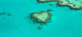 La technologie CRISPR pour modifier génétiquement les coraux