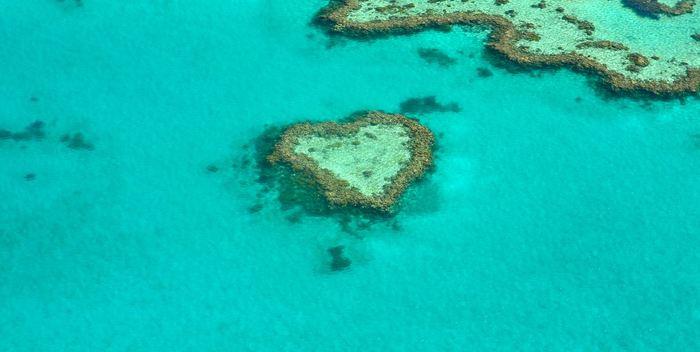 Selon des chercheurs de l'école de médecine de l'université de Stanford et leurs collaborateurs, les récifs coralliens au bord de l'effondrement pourraient bénéficier d'un coup de pouce de la part de la technologie de modification génétique CRISPR.