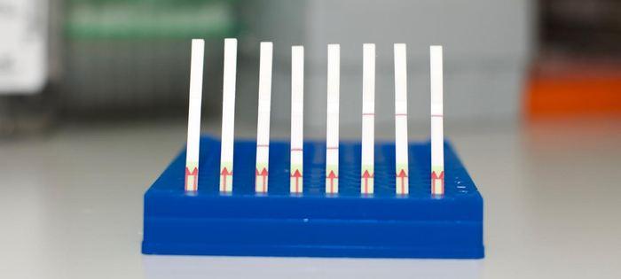 Une collection de bandes de papier pour le test SHERLOCK. A gauche, des bandes non utilisées. Au milieu, les papiers affichent un résultat négatif et sur la droite, les tests affichent des résultats positifs - Crédit : Broad Institute of MIT and Harvard