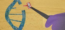 Les chercheurs rapportent la création d'une nouvelle plateforme basée sur CRISPR qui transforme ce dernier en un traitement de texte cellulaire.