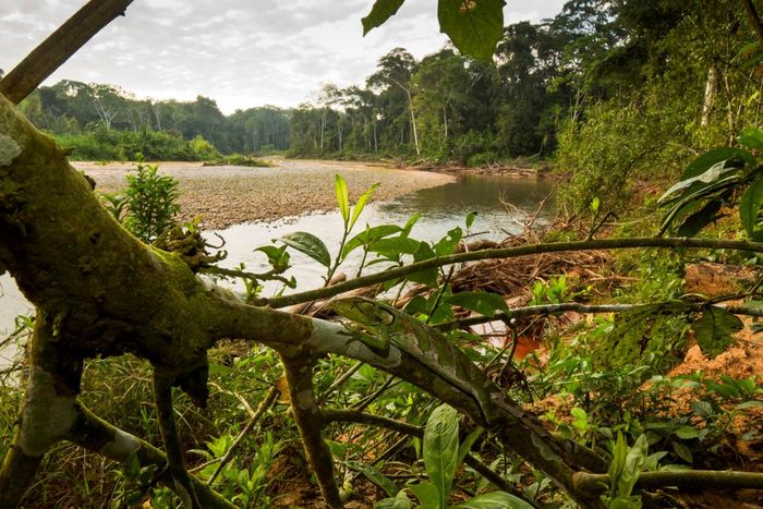 Une étude suggère que les aires protégées ont dû mal à jouer leur rôle. Un tiers de ces aires protégées subissent toujours des dégradations humaines.