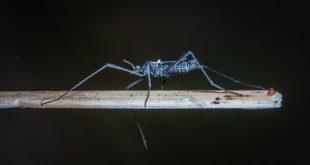 Une étude propose de reconstruire le début et la propagation du virus Zika pendant l'épidémie de 2016. La méthode permettrait de détecter d'autres épidémies inconnues à l'avenir.