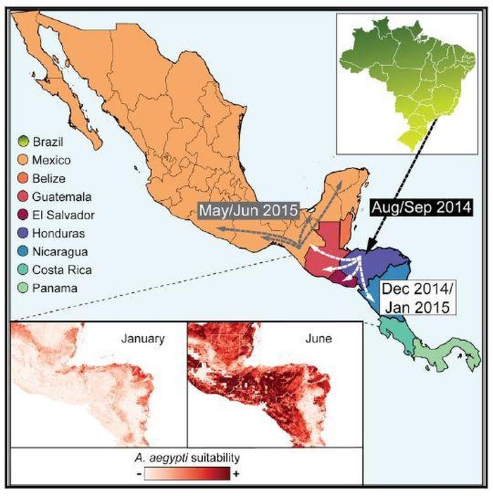 Ce graphique montre l'épidémiologie génomique du virus Zika en Amérique centrale et au Mexique. Après son introduction probable au Honduras en 2014, le virus s'est propagé sans être détecté dans la région. Les données génétiques et épidémiologiques indiquent que des pics de transmission biannuels se sont produits,et pourraient potentiellement s'expliquer par la variation locale de l'abondance des moustiques - Crédit : Thézé et al./Cell Host & Microbe