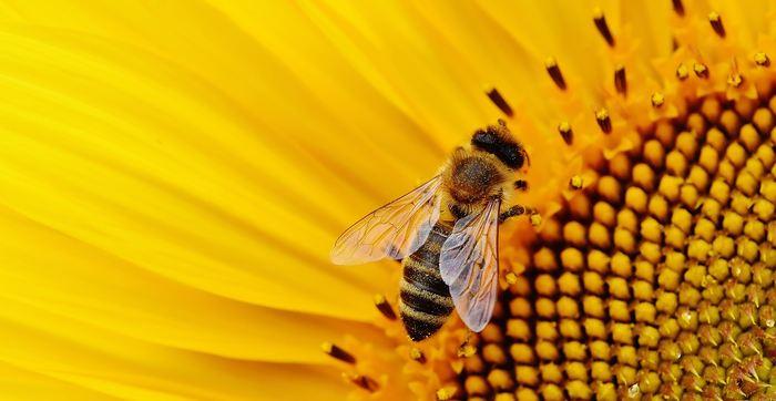 Les scientifiques ont découvert que les abeilles peuvent comprendre le concept de zéro, en les plaçant dans un club d'élite d'animaux intelligents capables de saisir cette notion mathématique assez complexe.