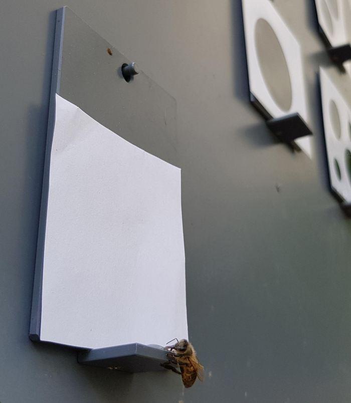 Formée pour choisir le nombre le plus bas sur une série d'options, une abeille choisit une image vide, révélant une compréhension du concept de zéro - Crédit : RMIT University