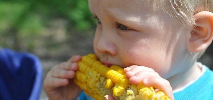 Une étude suggère que le changement climatique va impacter considérablement la culture du maïs qui est l'un des piliers de l'agriculture moderne et de notre société. À partir d'un réchauffement de 2 degrés Celsius, les risques de pénuries sont beaucoup plus élevés.