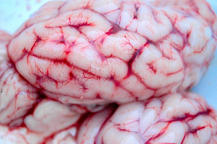 Une étude suggère que les drogues psychédéliques comme le LSD favorisent la plasticité neurale chez les souris et les mouches. Des pistes qui permettraient à ces substances de combattre la dépression ou le trouble de stress post-traumatique.