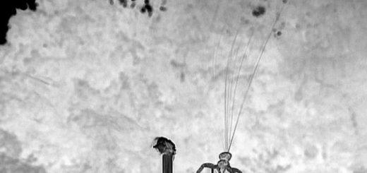 L'araignée-crabe tisse des dizaines de fines fibres de soie pour sa dispersion aérienne. Une feuille de fibres triangulaire est observée au moment du décollage - Crédit : Moonsung Cho, Technical University of Berlin.