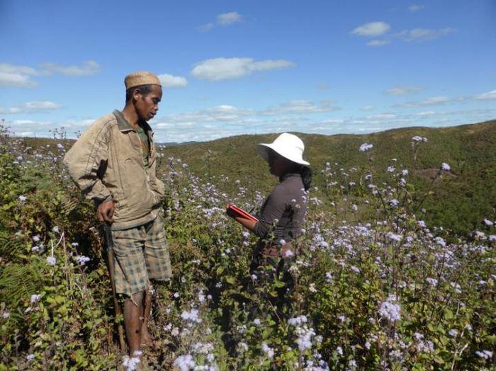 Rina Mandimbiniaina, co-auteur, qui interviewe un fermier en bordure des forêts tropicales de Madagascar - Crédit : JPG Jones